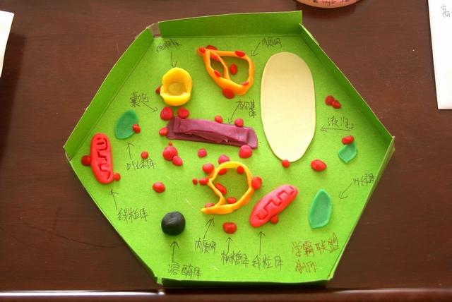 """郑州19中""""细胞三维结构模型作品展""""让学生大饱眼福"""